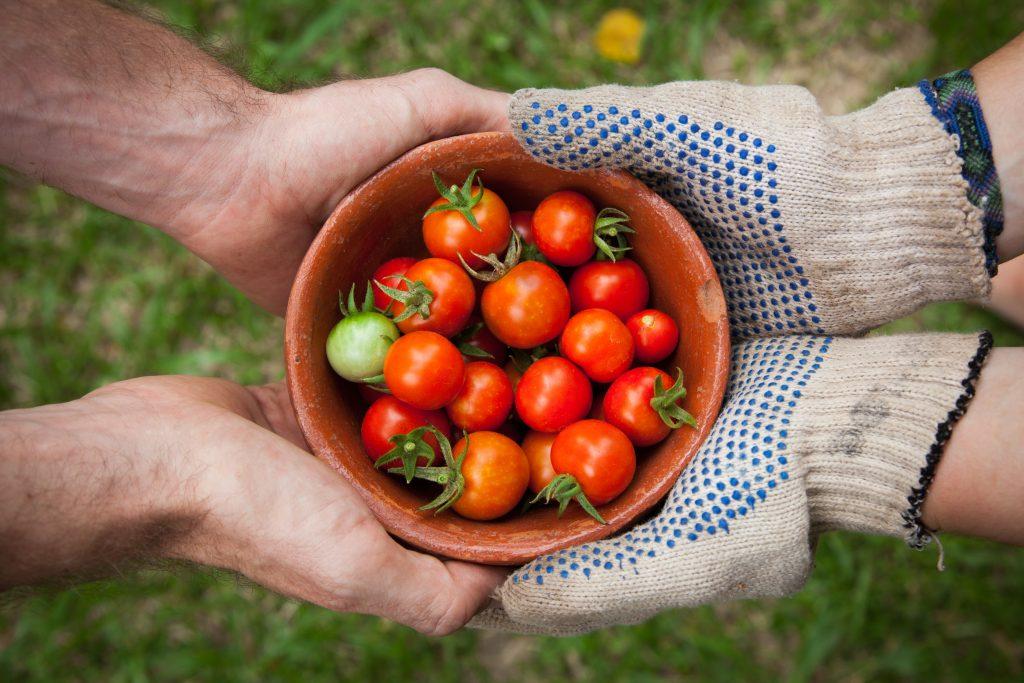 sajat termesztesu paradicsomot tart ket par emberkez