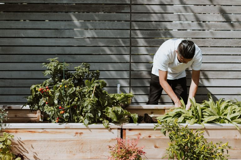 napon dolgozo fiatal kertesz